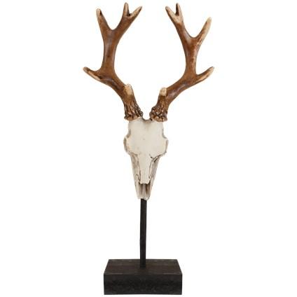 Crâne de cerf sur pied